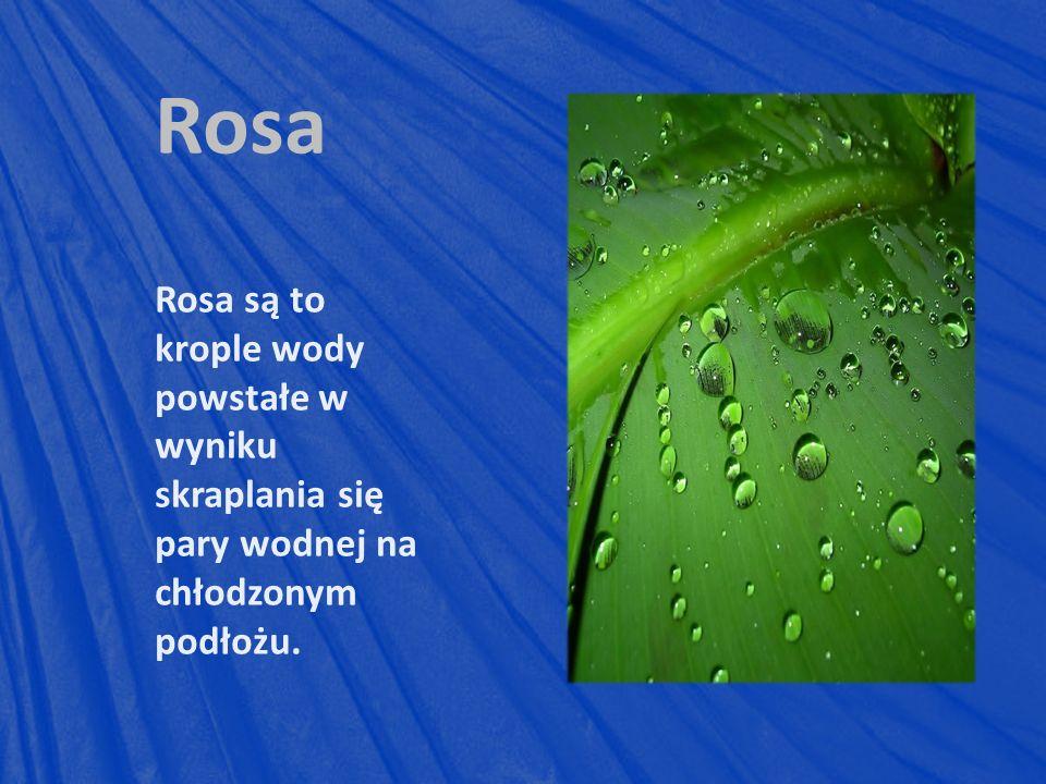 Rosa Rosa są to krople wody powstałe w wyniku skraplania się pary wodnej na chłodzonym podłożu.