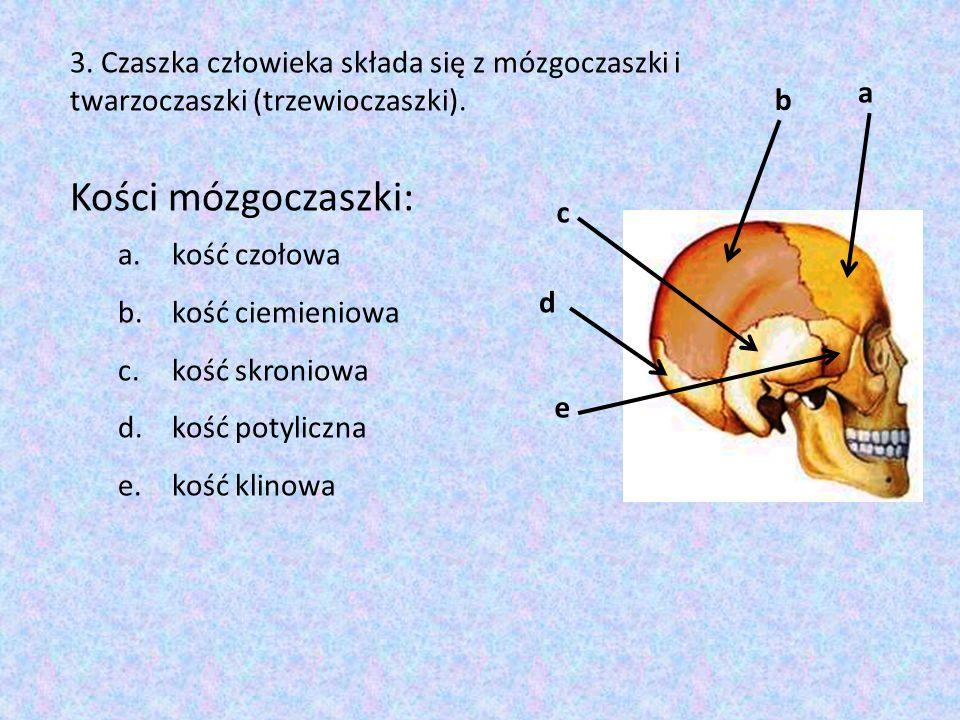 a c b e d 3. Czaszka człowieka składa się z mózgoczaszki i twarzoczaszki (trzewioczaszki). Kości mózgoczaszki: a.kość czołowa b.kość ciemieniowa c.koś
