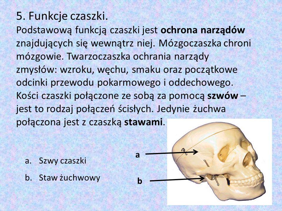 5. Funkcje czaszki. Podstawową funkcją czaszki jest ochrona narządów znajdujących się wewnątrz niej. Mózgoczaszka chroni mózgowie. Twarzoczaszka ochra
