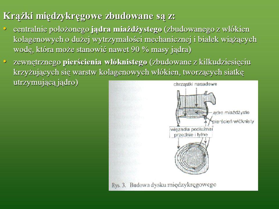 Krążki międzykręgowe zbudowane są z: centralnie położonego jądra miażdżystego (zbudowanego z włókien kolagenowych o dużej wytrzymałości mechanicznej i