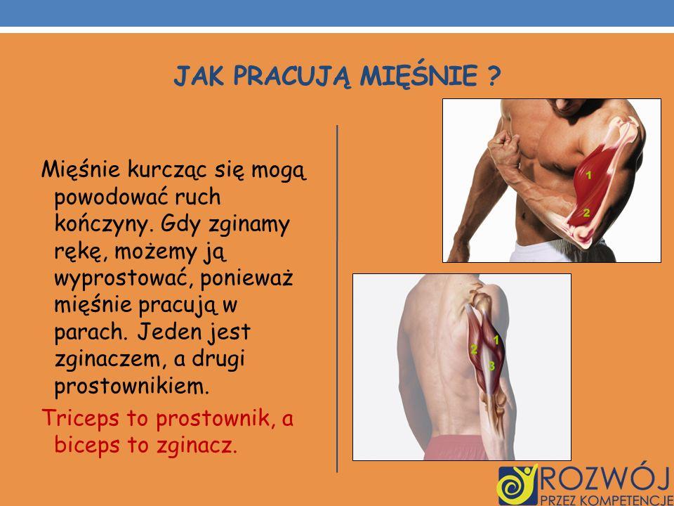 JAK PRACUJĄ MIĘŚNIE ? Mięśnie kurcząc się mogą powodować ruch kończyny. Gdy zginamy rękę, możemy ją wyprostować, ponieważ mięśnie pracują w parach. Je