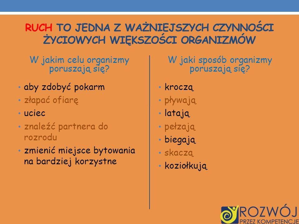 NASZ RAJD PIESZY Pielgrzymka na trasie Łasin-Rywałd W dniu 10 września 2011r.