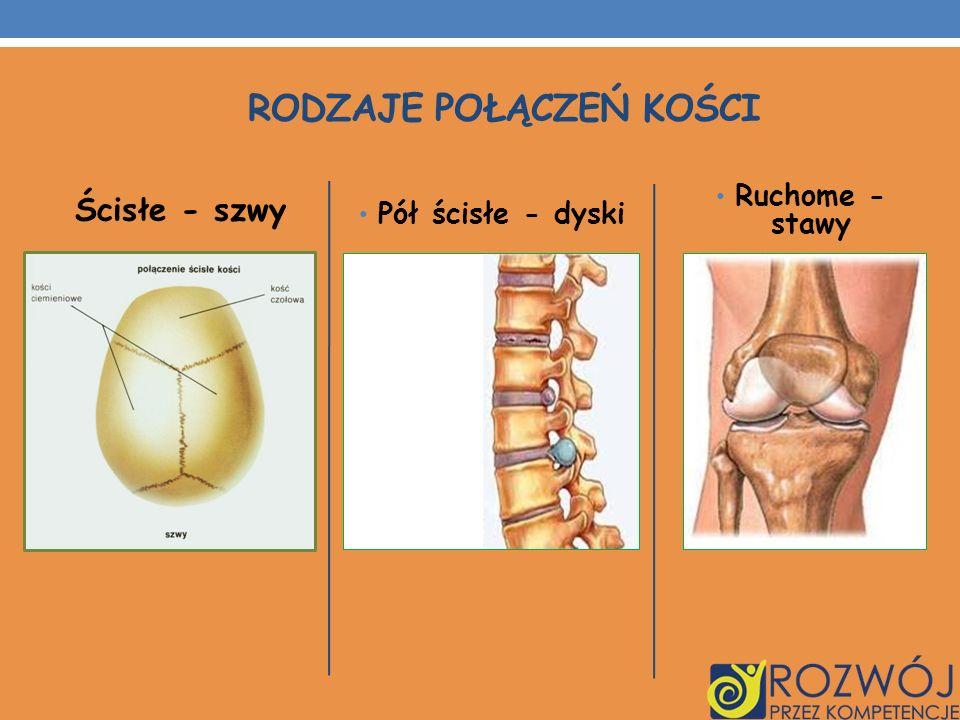 UKŁAD MIĘŚNIOWY Układ mięśniowy to czynny element układu ruchu Mięśnie człowieka utworzone są z tkanki mięśniowej poprzecznie prążkowanej szkieletowej, która pracuje zależnie od naszej woli, włókna mięśniowe się szybko kurczą, ale też szybko męczą.