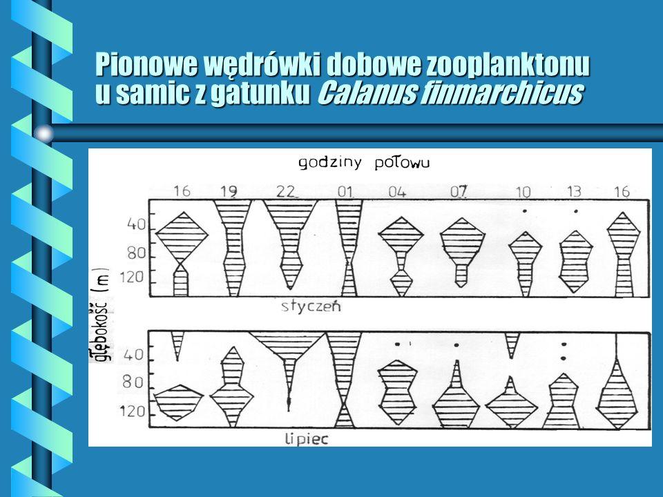 Wpływ światła na biologię i ekologię organizmów b Fotofile i fotofoby; b Gatunki euryfotyczne; b Adaptacja chromatyczna (barwy dopełniające); b Oczy teleskopowe (wydłużenie osi optycznej i wykształcenie dużej soczewki); b Bioluminiscencja – specyficzne zjawisko świetlne (w fotoforach zachodzi reakcja enzymu lucyferazy na lucyferynę w obecności bakterii – wytwarza się wówczas tzw.