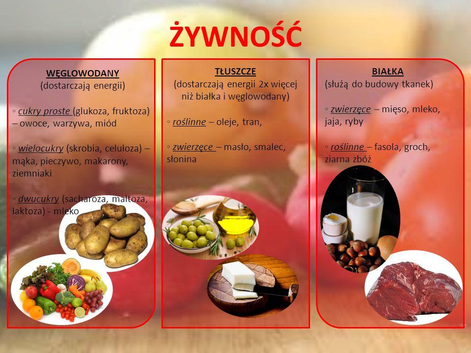ŻYWNOŚĆ WĘGLOWODANY (dostarczają energii) cukry proste (glukoza, fruktoza) – owoce, warzywa, miód wielocukry (skrobia, celuloza) – mąka, pieczywo, makarony, ziemniaki dwucukry (sacharoza, maltoza, laktoza) - mleko TŁUSZCZE (dostarczają energii 2x więcej niż białka i węglowodany) roślinne – oleje, tran, zwierzęce – masło, smalec, słonina BIAŁKA (służą do budowy tkanek) zwierzęce – mięso, mleko, jaja, ryby roślinne – fasola, groch, ziarna zbóż