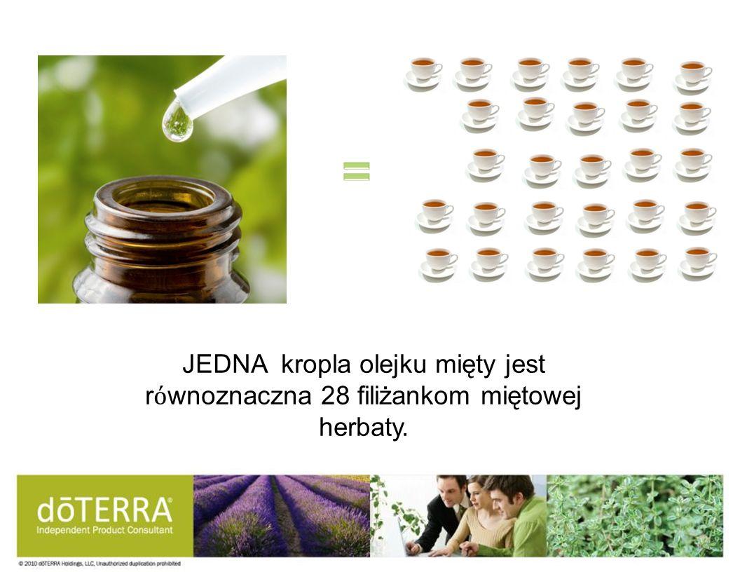 JEDNA kropla olejku mięty jest r wnoznaczna 28 filiżankom miętowej herbaty.
