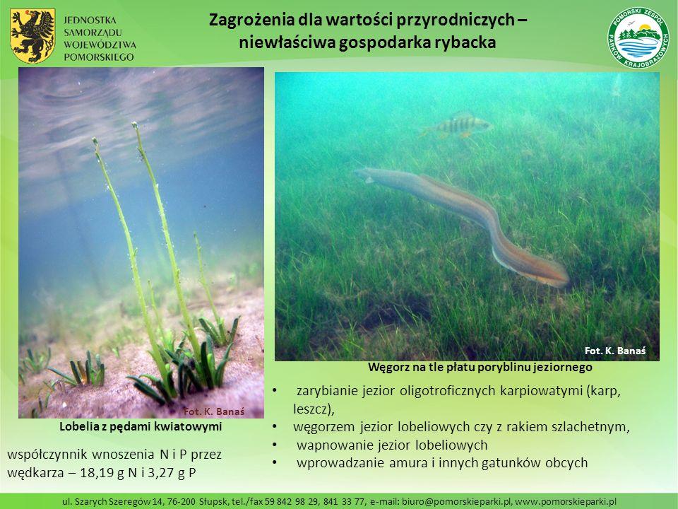 ul. Szarych Szeregów 14, 76-200 Słupsk, tel./fax 59 842 98 29, 841 33 77, e-mail: biuro@pomorskieparki.pl, www.pomorskieparki.pl zarybianie jezior oli
