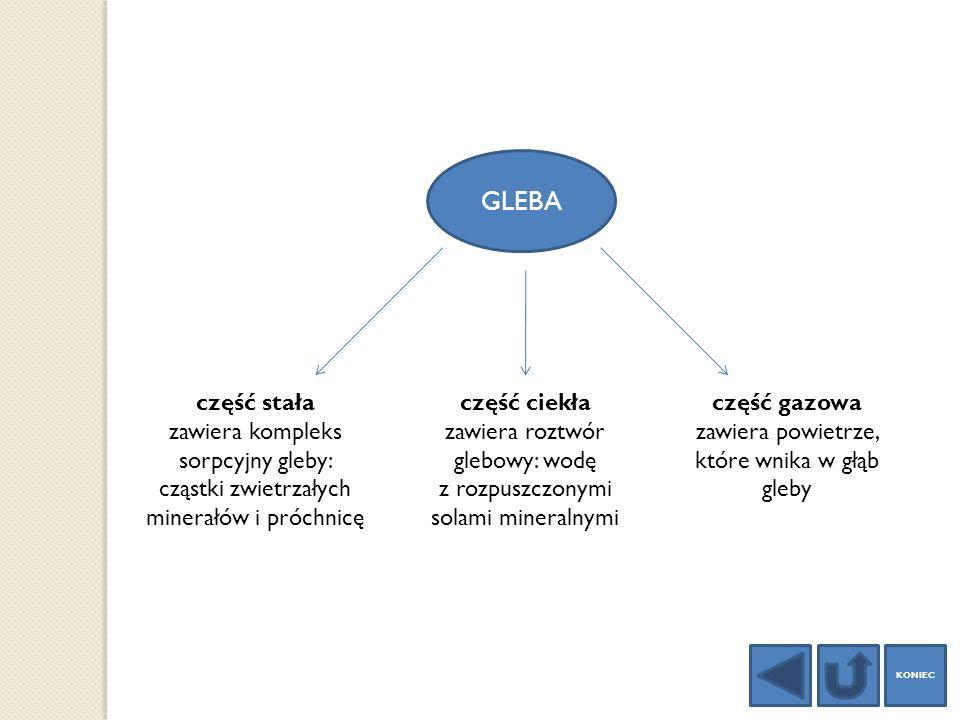 GLEBA część stała zawiera kompleks sorpcyjny gleby: cząstki zwietrzałych minerałów i próchnicę część ciekła zawiera roztwór glebowy: wodę z rozpuszczo