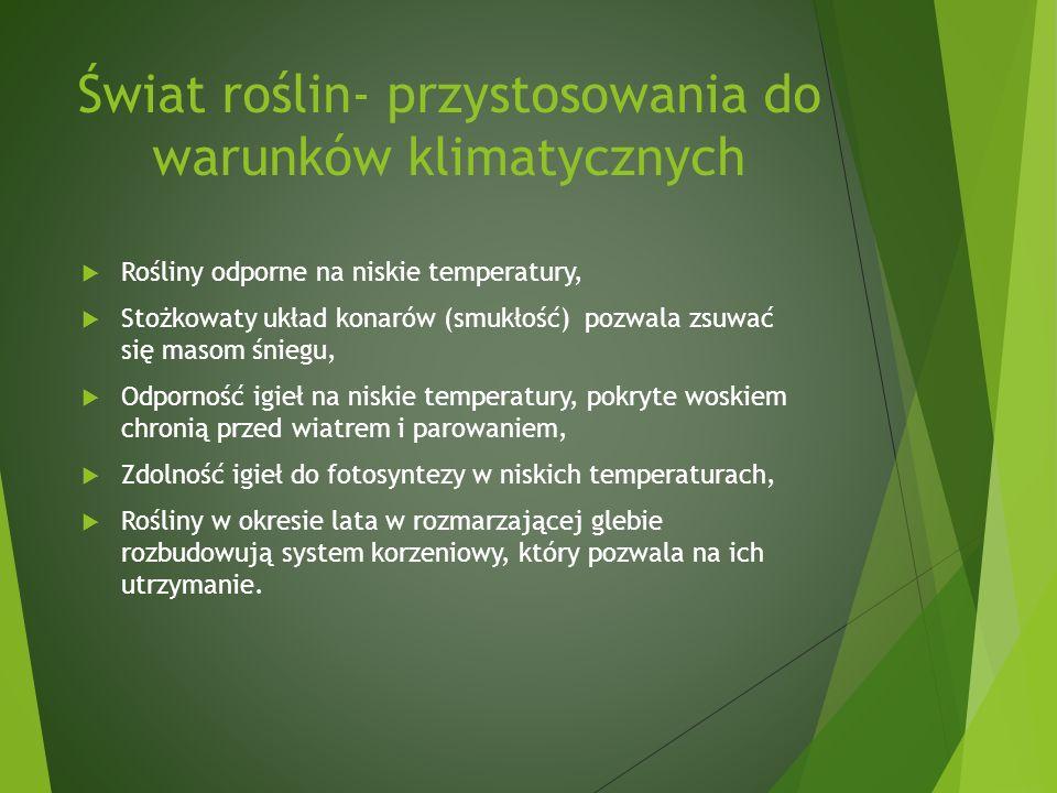 Świat roślin- przystosowania do warunków klimatycznych Rośliny odporne na niskie temperatury, Stożkowaty układ konarów (smukłość) pozwala zsuwać się masom śniegu, Odporność igieł na niskie temperatury, pokryte woskiem chronią przed wiatrem i parowaniem, Zdolność igieł do fotosyntezy w niskich temperaturach, Rośliny w okresie lata w rozmarzającej glebie rozbudowują system korzeniowy, który pozwala na ich utrzymanie.