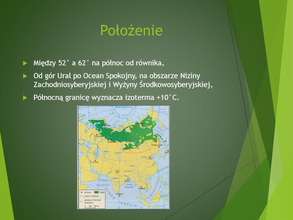 Położenie Między 52° a 62° na północ od równika, Od gór Ural po Ocean Spokojny, na obszarze Niziny Zachodniosyberyjskiej i Wyżyny Środkowosyberyjskiej, Północną granicę wyznacza izoterma +10°C.