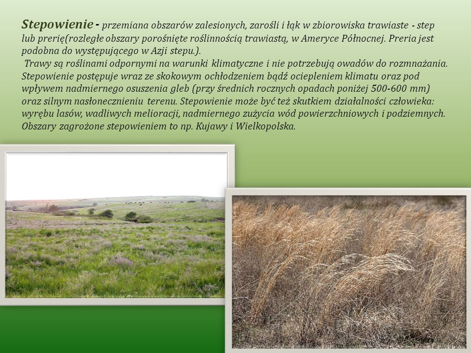 Stepowienie - przemiana obszarów zalesionych, zarośli i łąk w zbiorowiska trawiaste - step lub prerię(rozległe obszary porośnięte roślinnością trawias