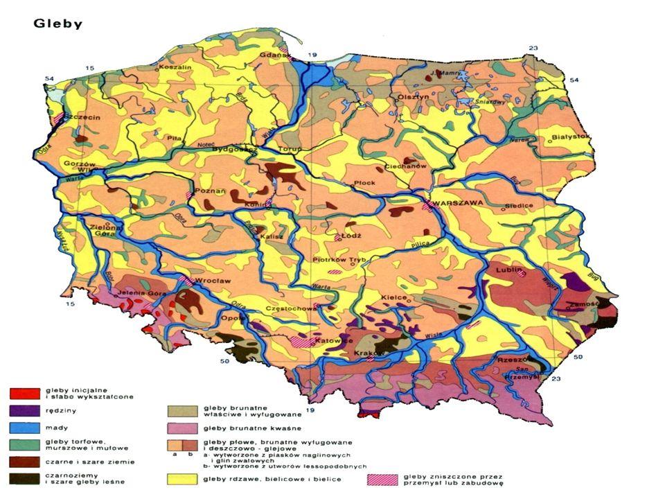 Powstanie gleby jest uzależnione od wielu czynników (czynniki glebotwórcze).