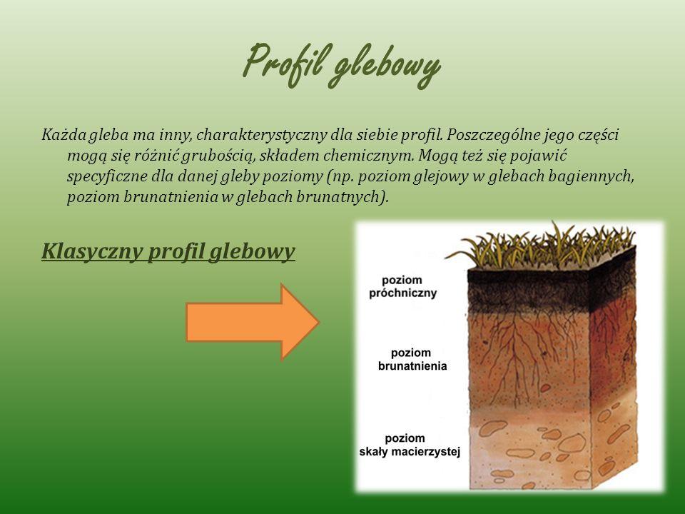 Profil glebowy Każda gleba ma inny, charakterystyczny dla siebie profil. Poszczególne jego części mogą się różnić grubością, składem chemicznym. Mogą