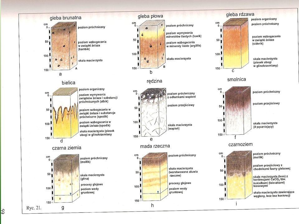 Proces glebotwórczy To wszelkie zmiany zachodzące w zwietrzelinie lub luźnej skale, prowadzące do powstania gleby.