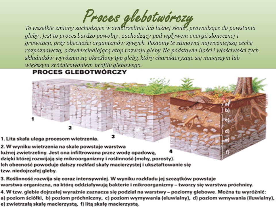 Proces glebotwórczy To wszelkie zmiany zachodzące w zwietrzelinie lub luźnej skale, prowadzące do powstania gleby. Jest to proces bardzo powolny, zach