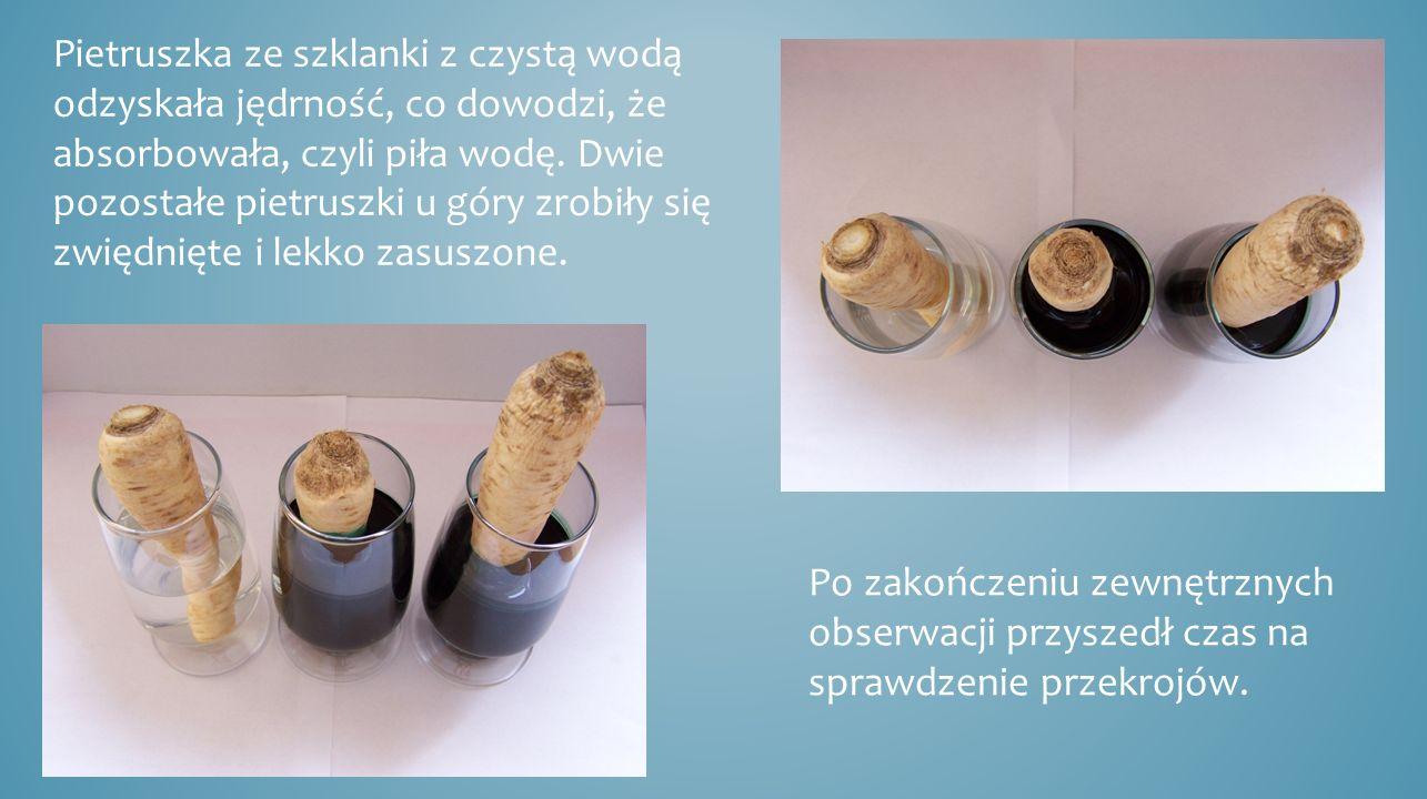 Pietruszka ze szklanki z czystą wodą odzyskała jędrność, co dowodzi, że absorbowała, czyli piła wodę. Dwie pozostałe pietruszki u góry zrobiły się zwi