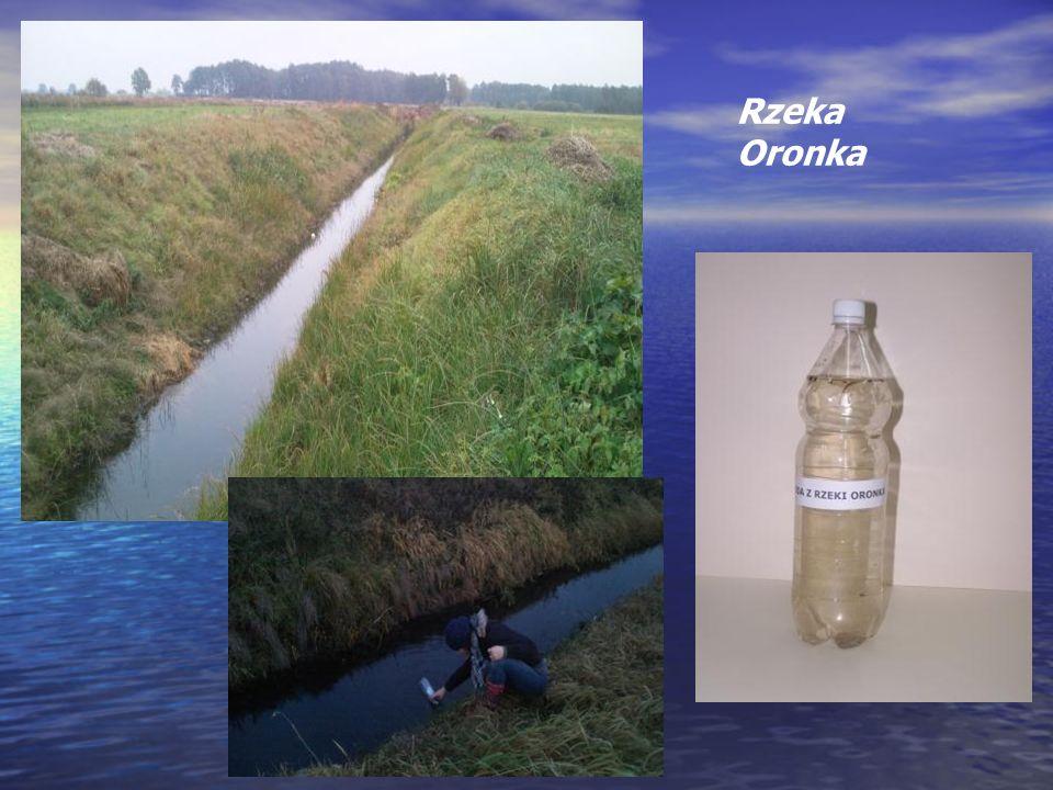 Rzeka Oronka