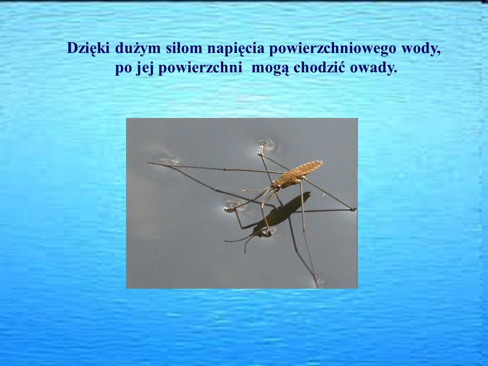 Dzięki dużym siłom napięcia powierzchniowego wody, po jej powierzchni mogą chodzić owady.