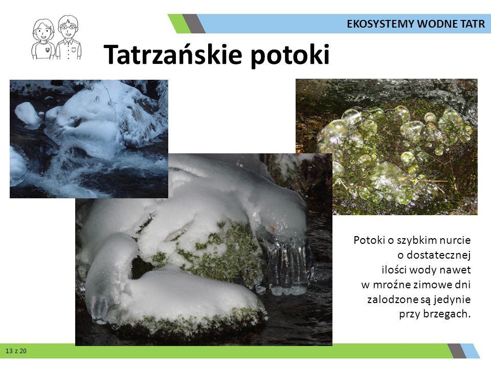 Potoki o szybkim nurcie o dostatecznej ilości wody nawet w mroźne zimowe dni zalodzone są jedynie przy brzegach. Tatrzańskie potoki 13 z 20 EKOSYSTEMY