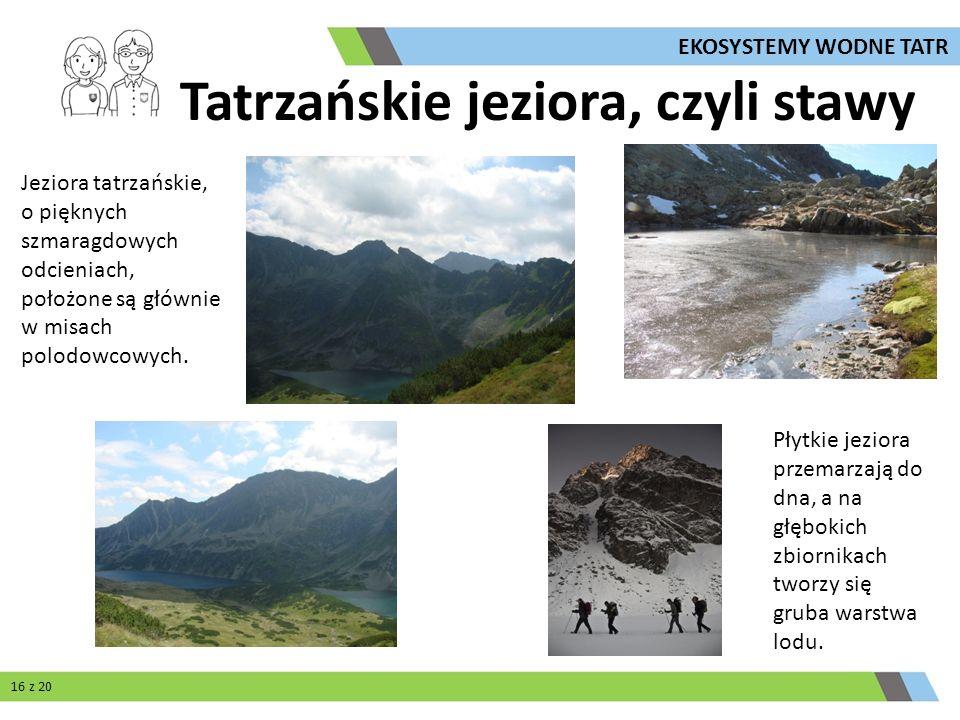 Jeziora tatrzańskie, o pięknych szmaragdowych odcieniach, położone są głównie w misach polodowcowych. Tatrzańskie jeziora, czyli stawy Płytkie jeziora