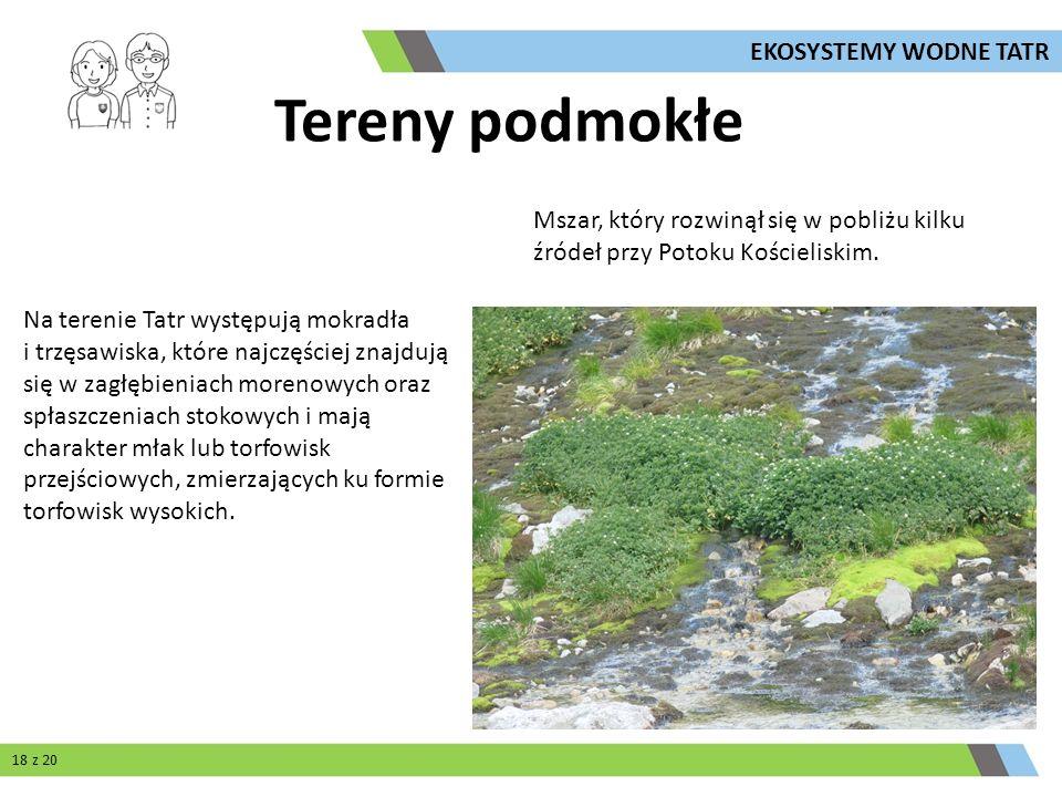 Tereny podmokłe Na terenie Tatr występują mokradła i trzęsawiska, które najczęściej znajdują się w zagłębieniach morenowych oraz spłaszczeniach stokow