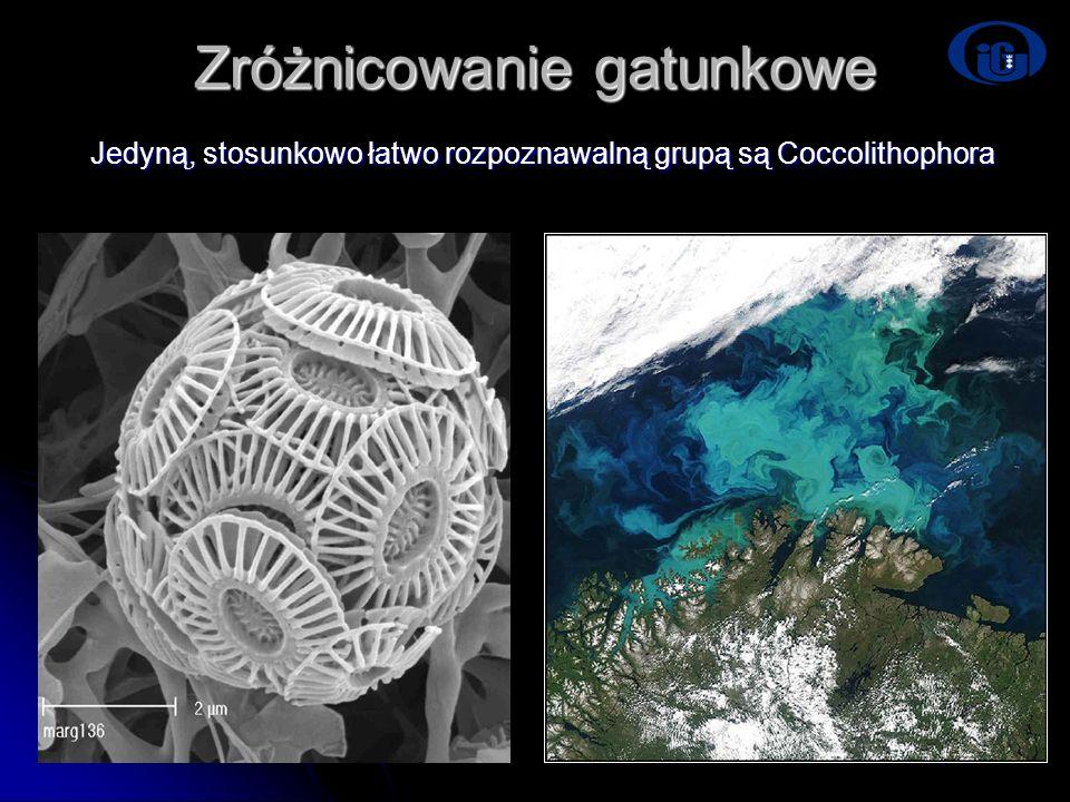 Zróżnicowanie gatunkowe Jedyną, stosunkowo łatwo rozpoznawalną grupą są Coccolithophora