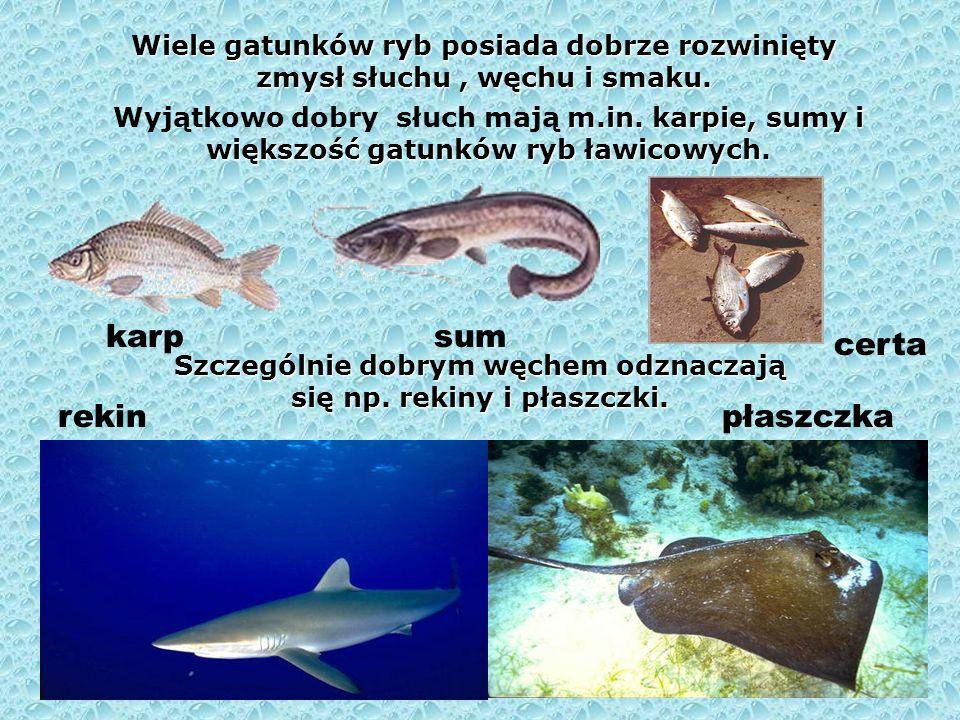 Liczne gatunki ryb są dodatkowo przystosowane do pobierania zarówno tlenu z wody, jak i tlenu atmosferycznego. Węgorze, minogi, niektóre sumy potrafią