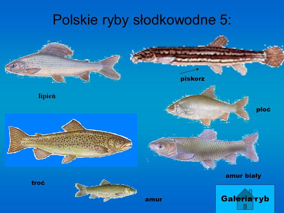 Polskie ryby słodkowodne 4:4: brzanka różanka certa świnka węgorz
