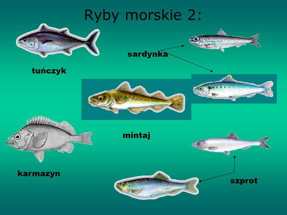 Ryby morskie 1: śledź dorsz wątłusz morszczuk dorsz makrela