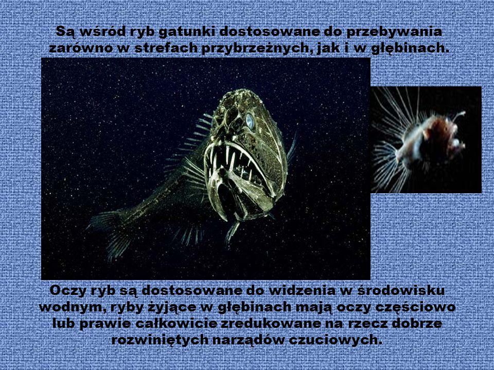 Znanych jest ponad 20 tys. gatunków ryb występujących współcześnie. Posiadają szereg przystosowań do bytowania w środowisku wodnym, nieliczne mogą prz