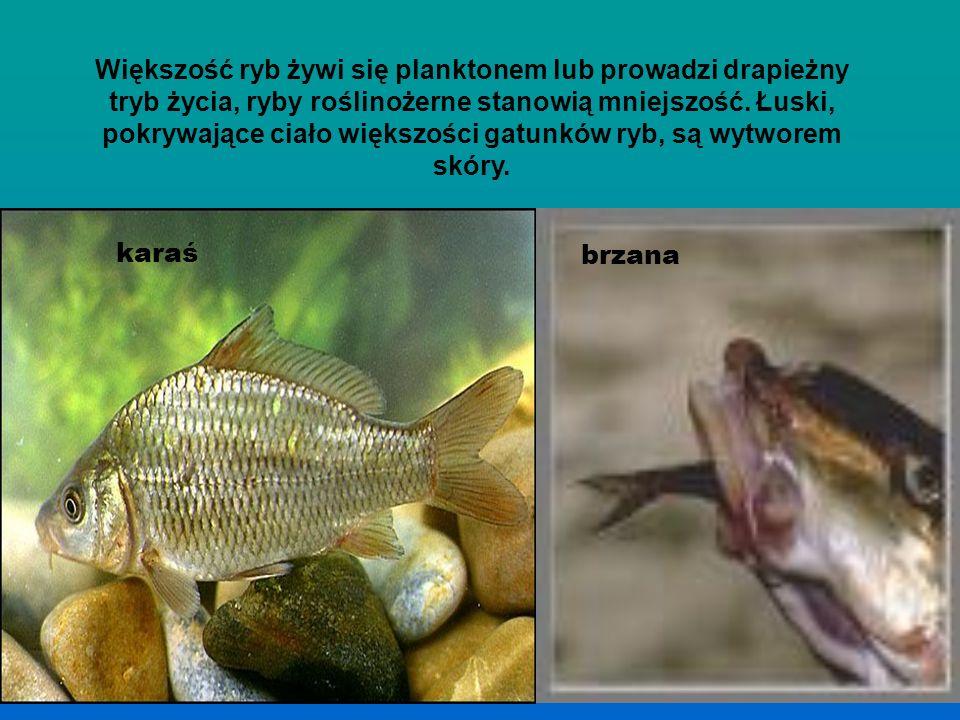 Są wśród ryb gatunki dostosowane do przebywania zarówno w strefach przybrzeżnych, jak i w głębinach. Oczy ryb są dostosowane do widzenia w środowisku