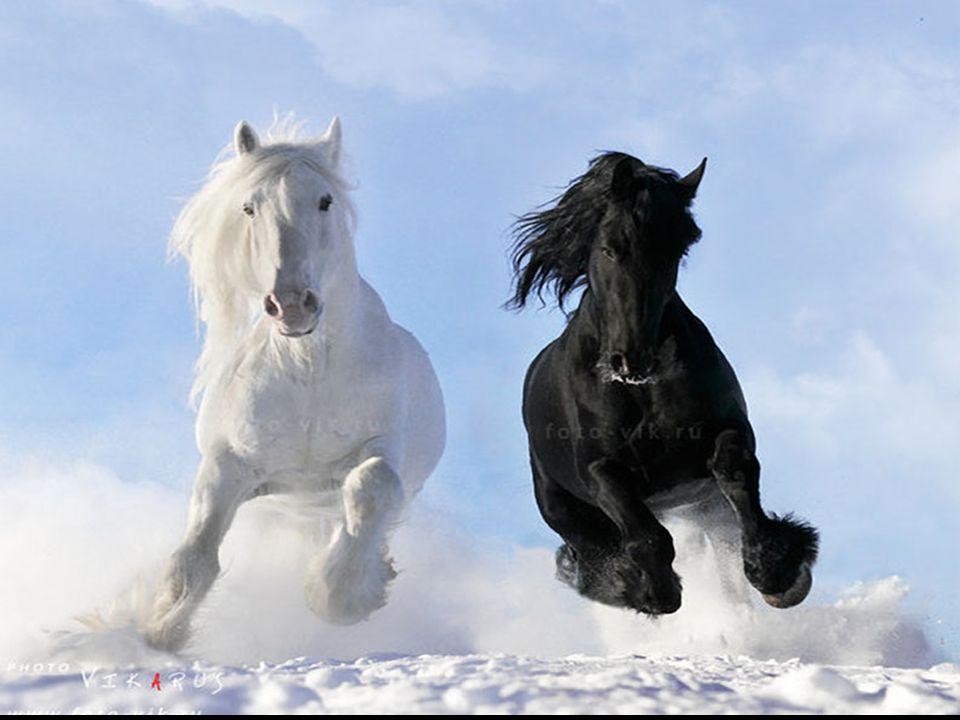 Trochę wolniej, wolniej konie, dokąd rwiecie cwałem Co tam wam czarne wodze i bat Takie mam konie narowiste jakie sam wybrałem Życia mi trochę żal, pieśni żal, co za świat Koniom woda i sól Pieśniom miłość i ból Ile czasu los da Jeszcze dzień, może dwa...