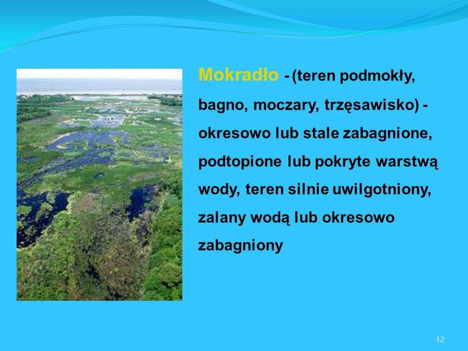 12 Mokradło -(teren podmokły, bagno, moczary, trzęsawisko) - okresowo lub stale zabagnione, podtopione lub pokryte warstwą wody, teren silnie uwilgotniony, zalany wodą lub okresowo zabagniony