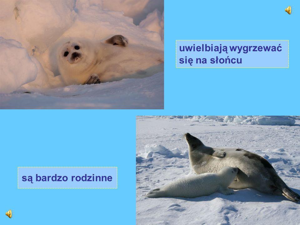Nurkując, pozostają pod wodą zwykle do 10 minut. Śpią unosząc się na powierzchni wody, pod wodą lub wylegują się na lądzie.