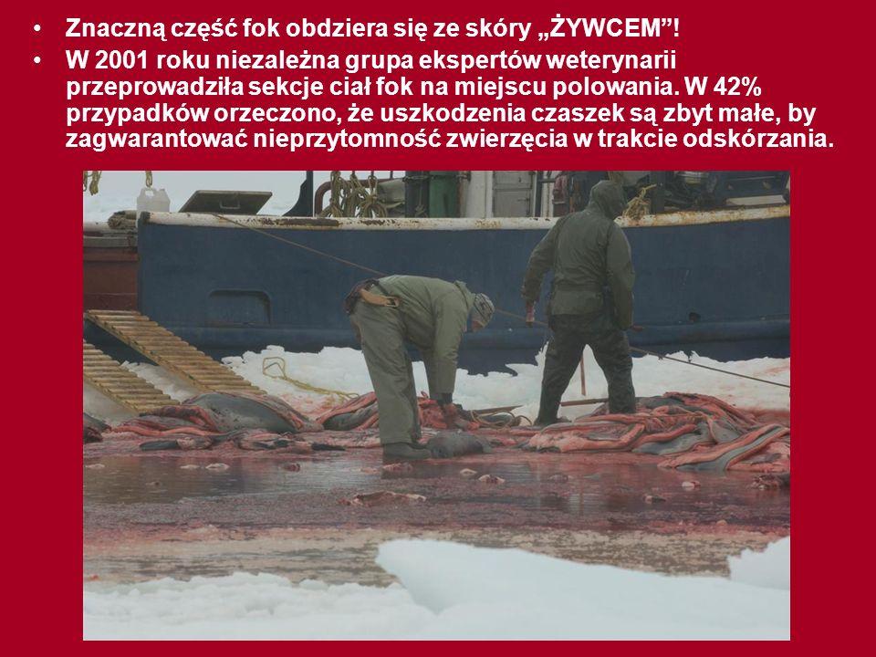 SMUTNY LOS FOKI: W roku 2005 zabito dla futra ponad 317 tysięcy fok, co oznacza, że od rozpoczęcia polowań zabito już prawie MILION fok!