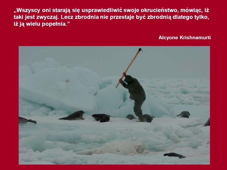 97% fok zabitych podczas komercyjnych polowań miała mniej niż 3 miesiące, a większość z nich poniżej jednego miesiąca. Wiele foczych szczeniąt nie zja