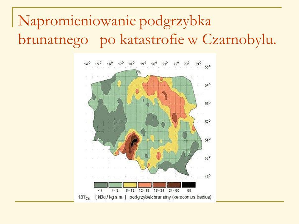 Napromieniowanie podgrzybka brunatnego po katastrofie w Czarnobylu.