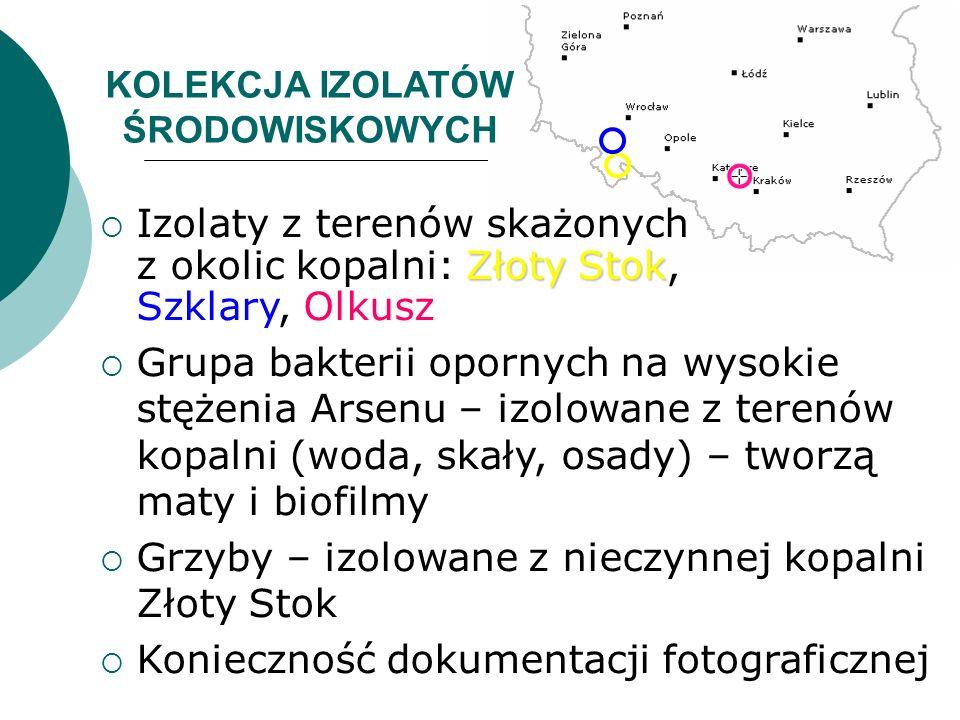 KOLEKCJA IZOLATÓW ŚRODOWISKOWYCH Złoty Stok Izolaty z terenów skażonych z okolic kopalni: Złoty Stok, Szklary, Olkusz Grupa bakterii opornych na wysok