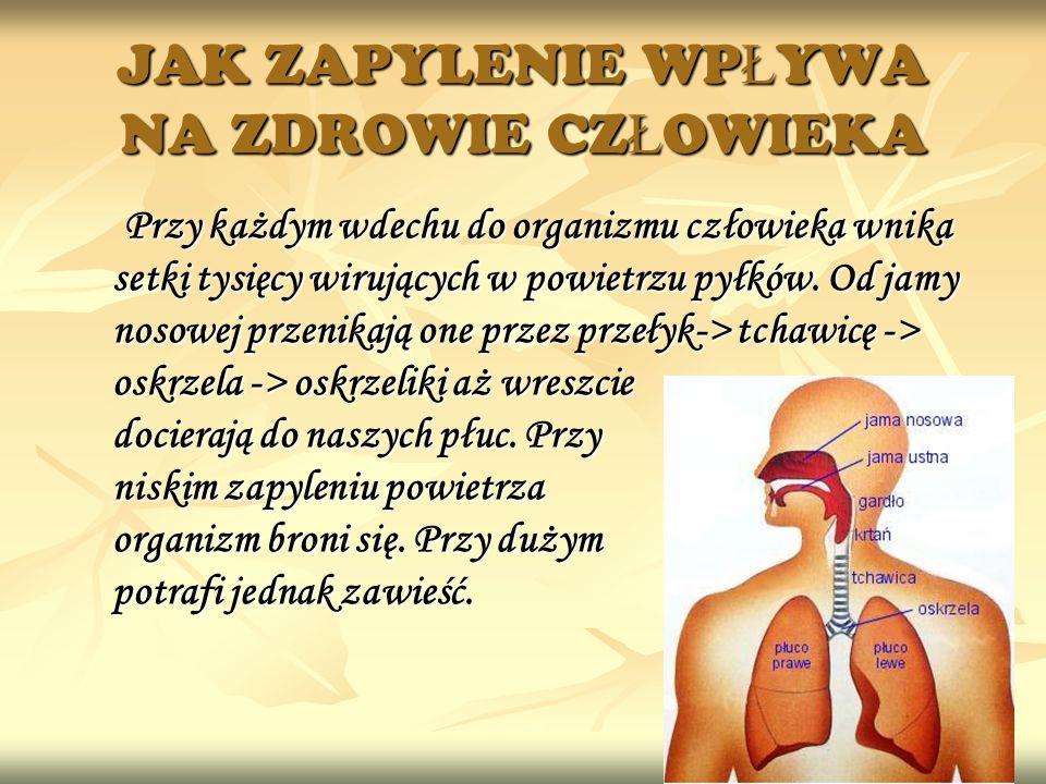 JAK ZAPYLENIE WPŁYWA NA ZDROWIE CZŁOWIEKA Przy każdym wdechu do organizmu człowieka wnika setki tysięcy wirujących w powietrzu pyłków. Od jamy nosowej