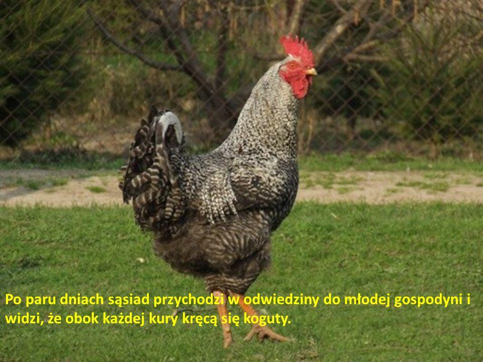 Meeganka przeprowadziwszy się na wieś (moda na eko i te sprawy), postanowiła założyć małą hodowlę kur. Zapytała sąsiada: - Ile mam kupić niosek, żeby