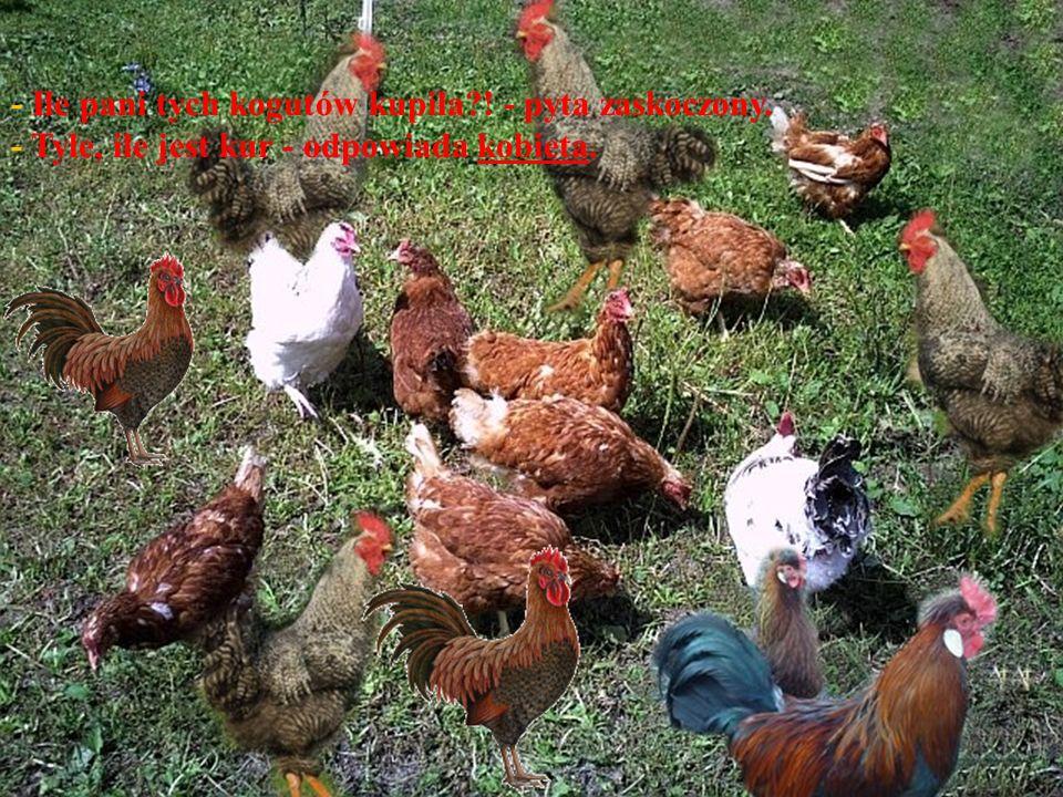 Po paru dniach sąsiad przychodzi w odwiedziny do młodej gospodyni i widzi, że obok każdej kury kręcą się koguty.