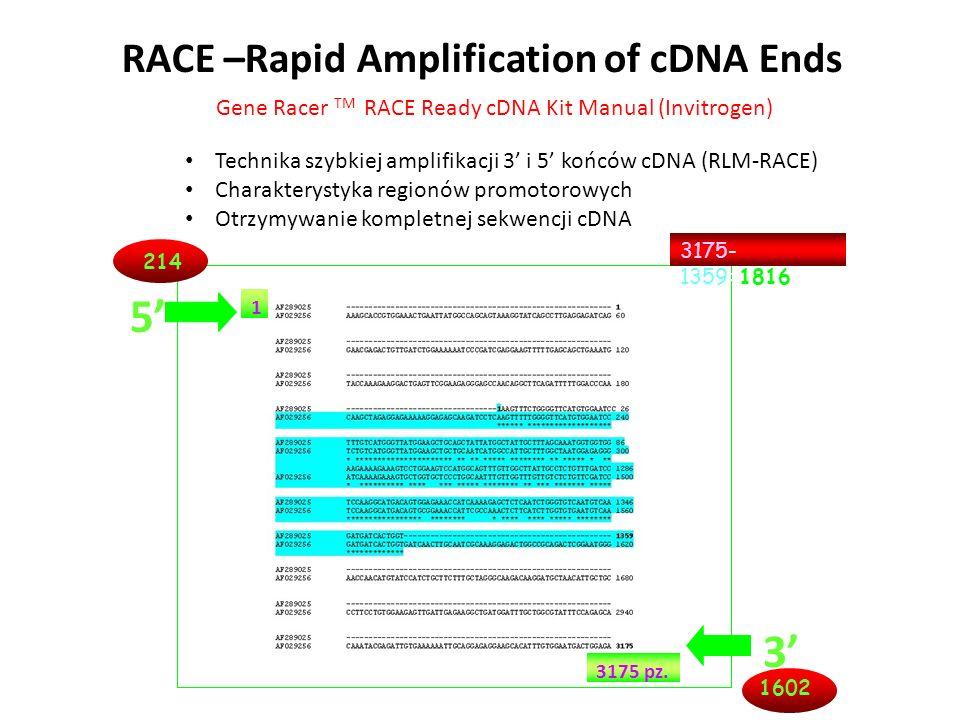 RACE –Rapid Amplification of cDNA Ends Technika szybkiej amplifikacji 3 i 5 końców cDNA (RLM-RACE) Charakterystyka regionów promotorowych Otrzymywanie