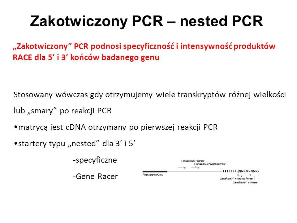 Zakotwiczony PCR – nested PCR Zakotwiczony PCR podnosi specyficzność i intensywność produktów RACE dla 5 i 3 końców badanego genu Stosowany wówczas gd