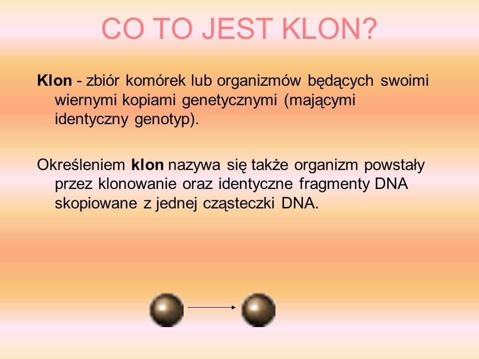 SKLONOWANE ZWIERZĘTA Ż aba Rana pipiens (1952) Ż aba Xenopus laevis (1958, 1962 ) K arp: (1963) O wca: (1996) M ałpa: samica Rezus ( styczeń 2000 ) Ś winia: 5 prosiaków z jednej świni ( Szkocja 2000 ) B awół: samiec ( styczeń 2001) K rowa: samica Alpha and Beta (2001) K ot: samica CopyCat CC (jesień 2001) M ysz: Wakayama i Yanagimachi (1998)