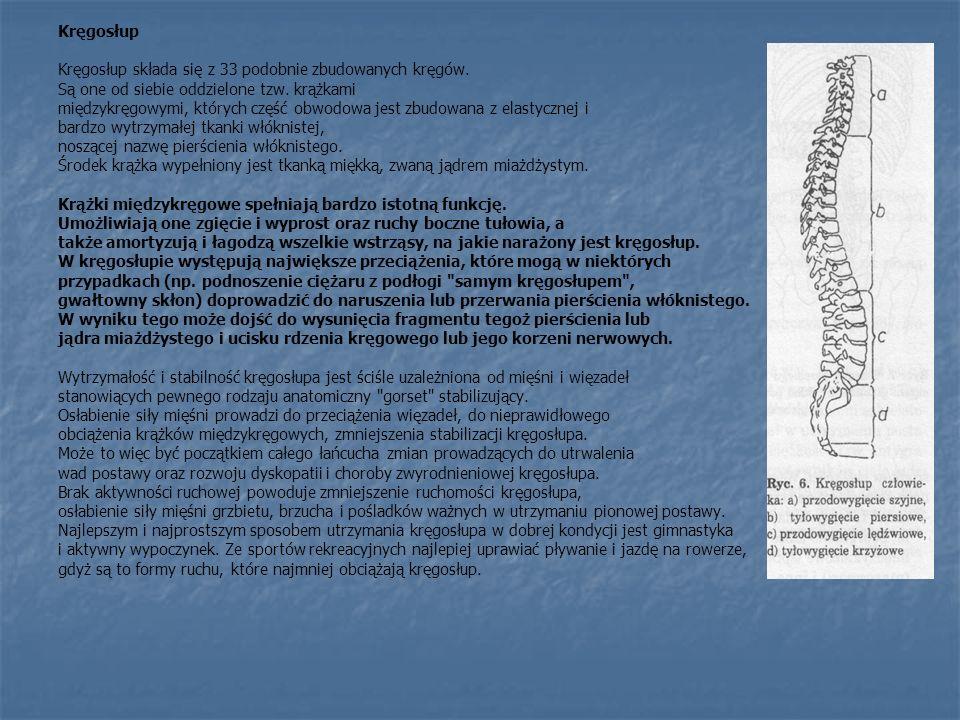 Kręgosłup Kręgosłup składa się z 33 podobnie zbudowanych kręgów. Są one od siebie oddzielone tzw. krążkami międzykręgowymi, których część obwodowa jes