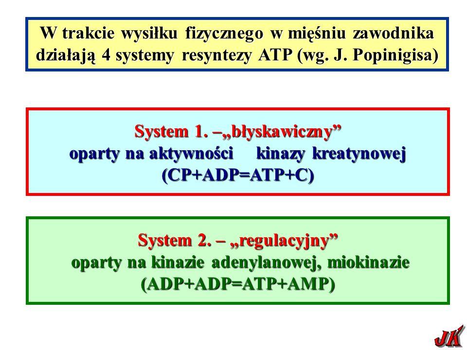 W trakcie wysiłku fizycznego w mięśniu zawodnika działają 4 systemy resyntezy ATP (wg.