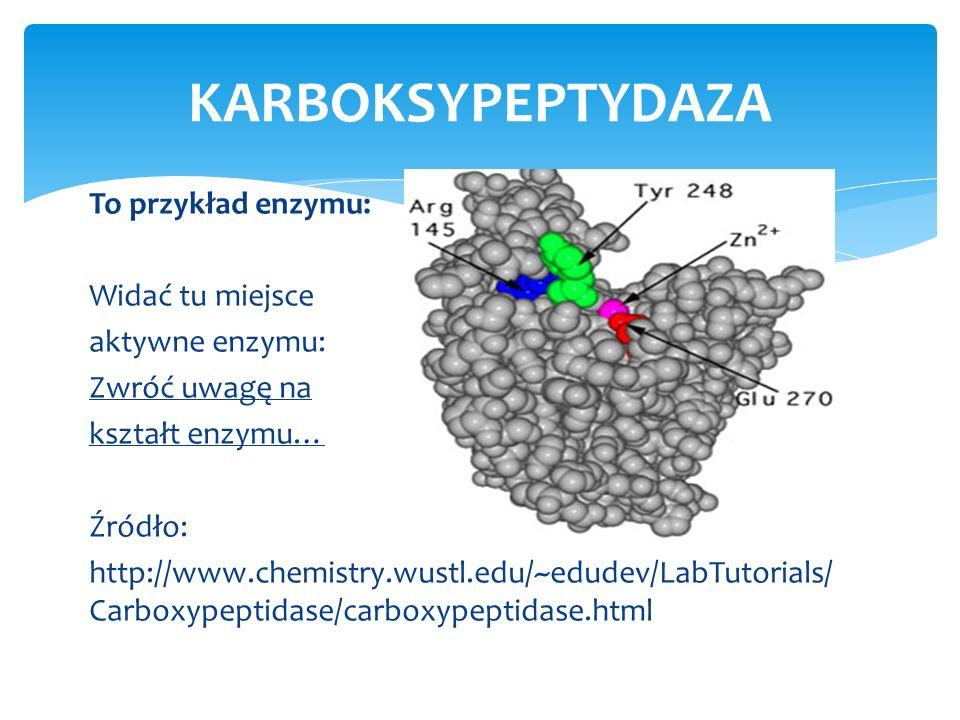 To przykład enzymu: Widać tu miejsce aktywne enzymu: Zwróć uwagę na kształt enzymu… Źródło: http://www.chemistry.wustl.edu/~edudev/LabTutorials/ Carbo
