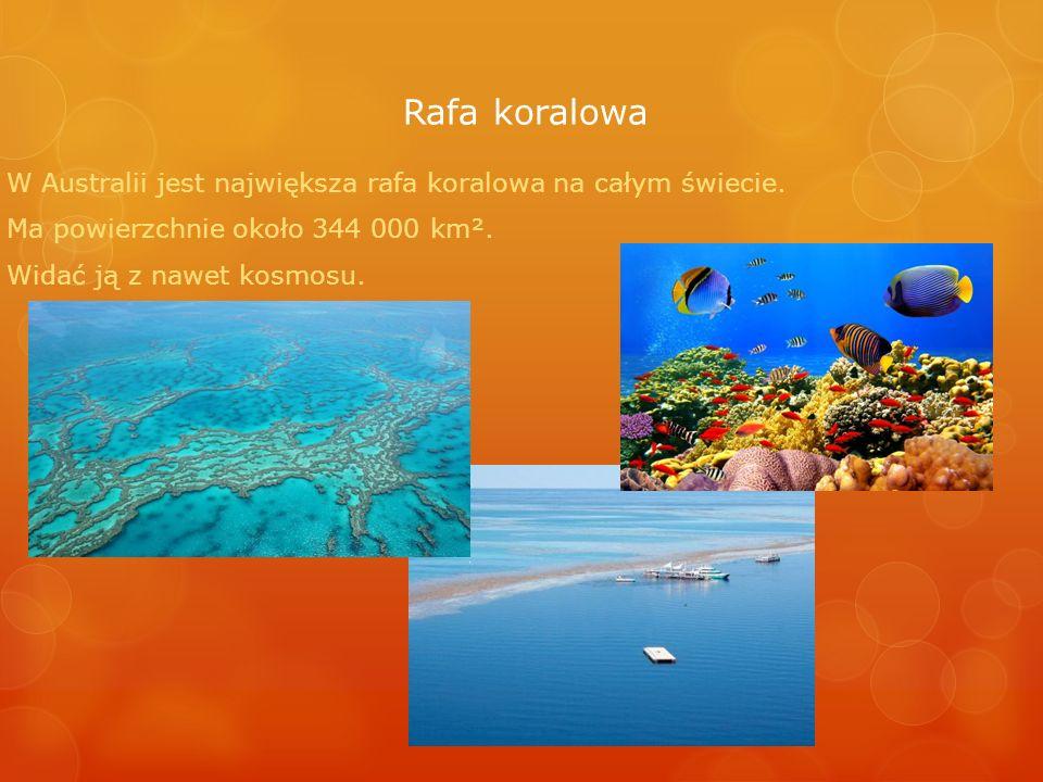 Rafa koralowa W Australii jest największa rafa koralowa na całym świecie. Ma powierzchnie około 344 000 km². Widać ją z nawet kosmosu.