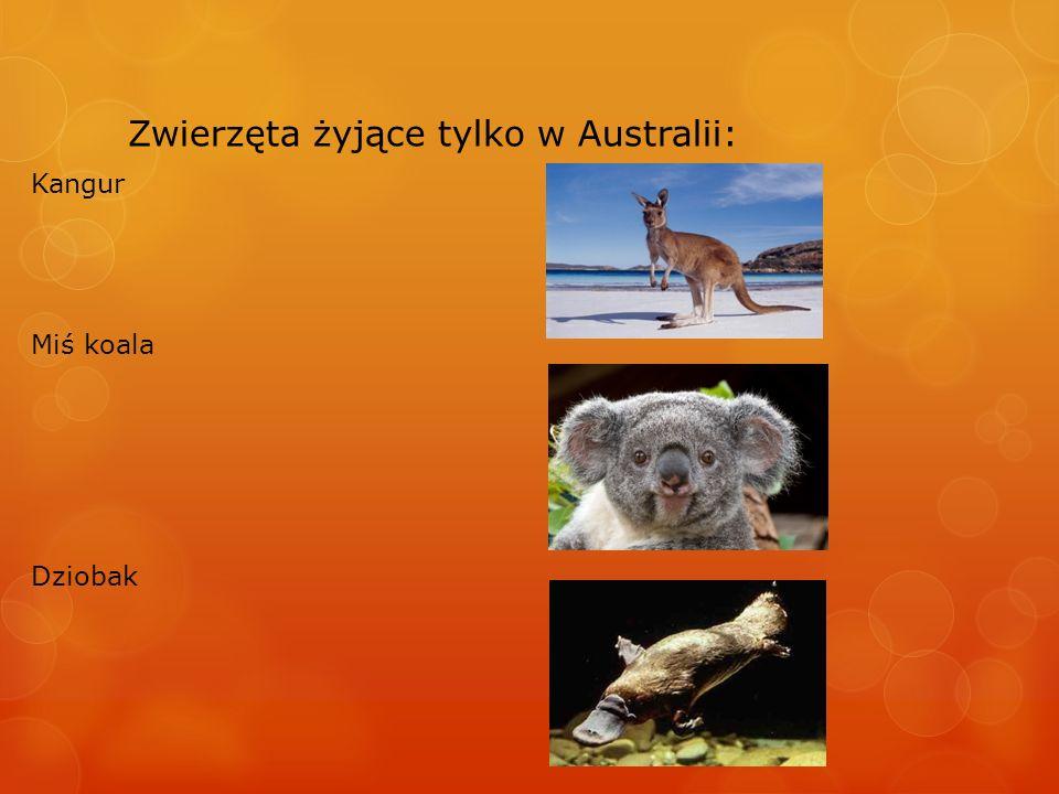 Zwierzęta żyjące tylko w Australii: Kolczatka Diabeł tasmański Pies dingo