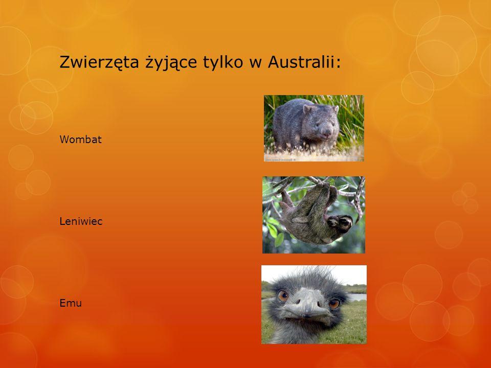 Zwierzęta żyjące tylko w Australii: Wombat Leniwiec Emu